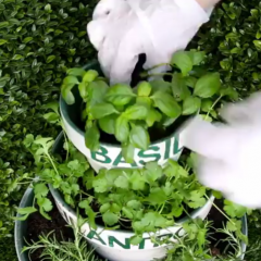 A creative way to grow your own herbs