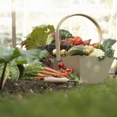 The A, B , C's of Beginner Vegetable Gardening