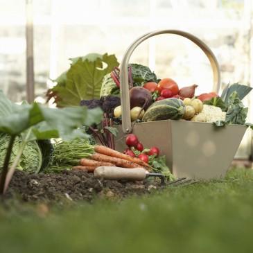 The A, B , C's of Beginner Vegetable Gardening