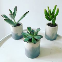 Minis Succulent Pot Set of 3