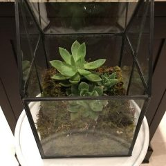 The Shed Succulent Glass Terrarium